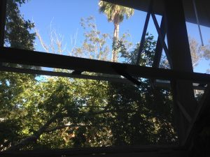 View from window with trees and blue sky.