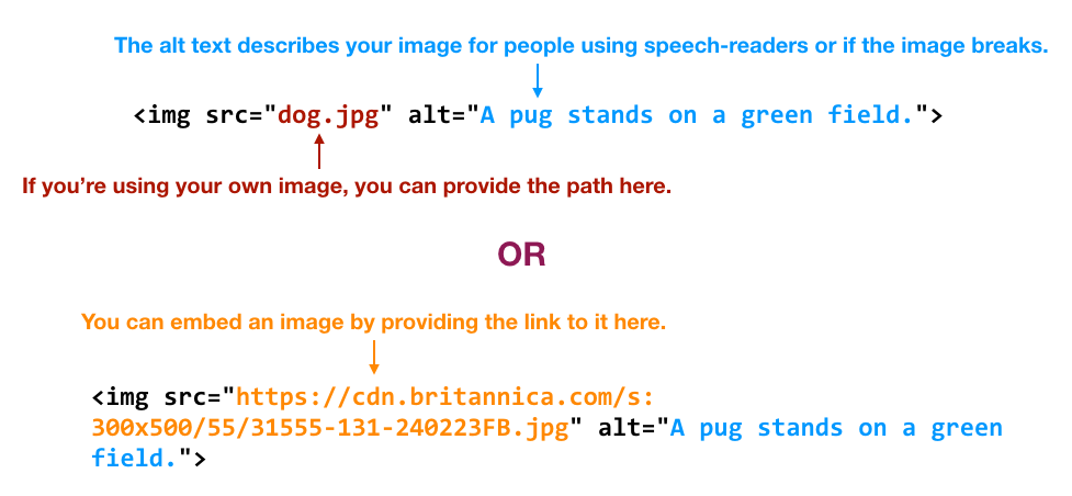 Images can be displayed either by entering a path in the img tag or by linking to an image on another site.