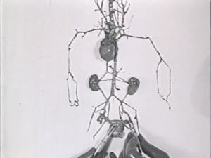 Frame from Circulatory System (1924)