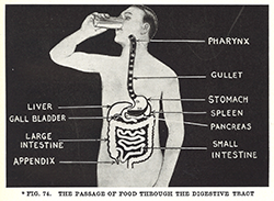 For some reason, I love this image, from Sarnoff's The Human Body in Pictures. It's so stylish!
